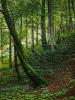 Deciduous forest near Schongau