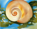 The snail and the algae