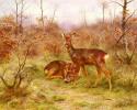 Пара косуль в лесу Фонтенбло
