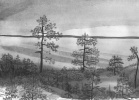 Pines on the lake