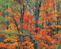 Autumn in the Cherokee Forest