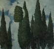 Наблюдение 9. Кипарисы
