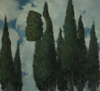 Observation 9. Cypress