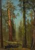 Гигантская секвойя Гризли, Марипоза-Гроув, Калифорния