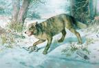Николай Егорович Сверчков. Попался волк. 1896