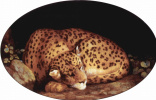 Джордж Стаббс. Спящий леопард