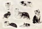 Генриетта Роннер-Книп. Кошка пьюшая, спящая и играющая