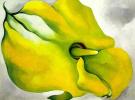 Желтая канна