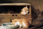 Генриетта Роннер-Книп. Двое котят в сарае