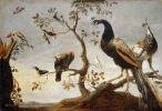 Франс Снейдерс. Птицы на ветвях