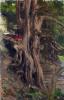 Деревья на Кливдене, Фредерик
