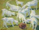 Goats in the sun