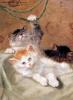 Три котенка играют