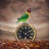 «Время не ждет»
