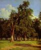 Old elms in Prater