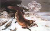 Гюстав Курбе. Лиса в снегу