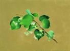 Ветка липы в цвету