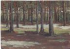 Arkady Pavlovich Laptev. Pine forest