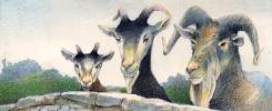 Дэвид Йоргенсен. Три козы