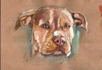 Евгения Брайд. Собака породы Американский ПитБульТерьер