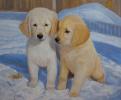 Щенки на снегу