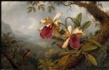 Мартин Джонсон Хед. Орхидеи и колибри
