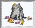 Сны кошек 41