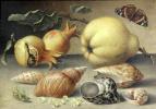 Балтазар ван дер Аст. Фрукты, раковины и насекомые на каменном столе