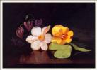 Горстка цветов