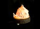 Дизайнерский светильник Большая Раковина