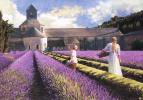 Heide Press. Lavender