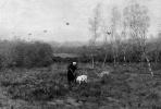 Виллем Амель. Пейзаж с женщиной и козой