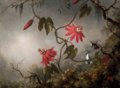 Пассифлора (страстоцвет) и колибри