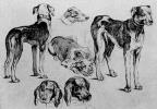 Венцель Холлар. Охотничьи собаки