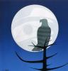 Орел и луна