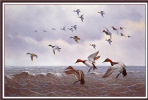 Оуэн Громм. Птицы над землей