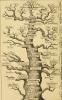 "Genealogy. ""Anthropology and human development"""
