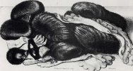 Still life with fur