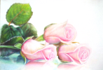 Sophie Wasilewska. Pink roses