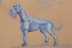 Собака породы Немецкий Дог