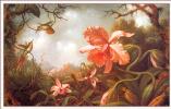 Мартин Джонсон Хед. Две колибри и две разновидности орхидеи