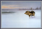 Оуэн Громм. Волк и лебедь