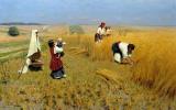 The harvest in Ukraine