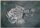 "Natalia Andreevna Korotaeva. Hatchet, series ""Mechanical Aquarium"""