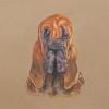 Собака породы Бладхаунд