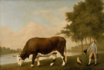 Джордж Стаббс. Линкольнширский бык
