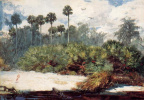 Winslow Homer. The Jungle Florida