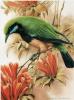 Птицы 12
