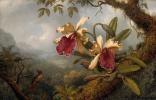 Мартин Джонсон Хед. Две орхидеи и колибри