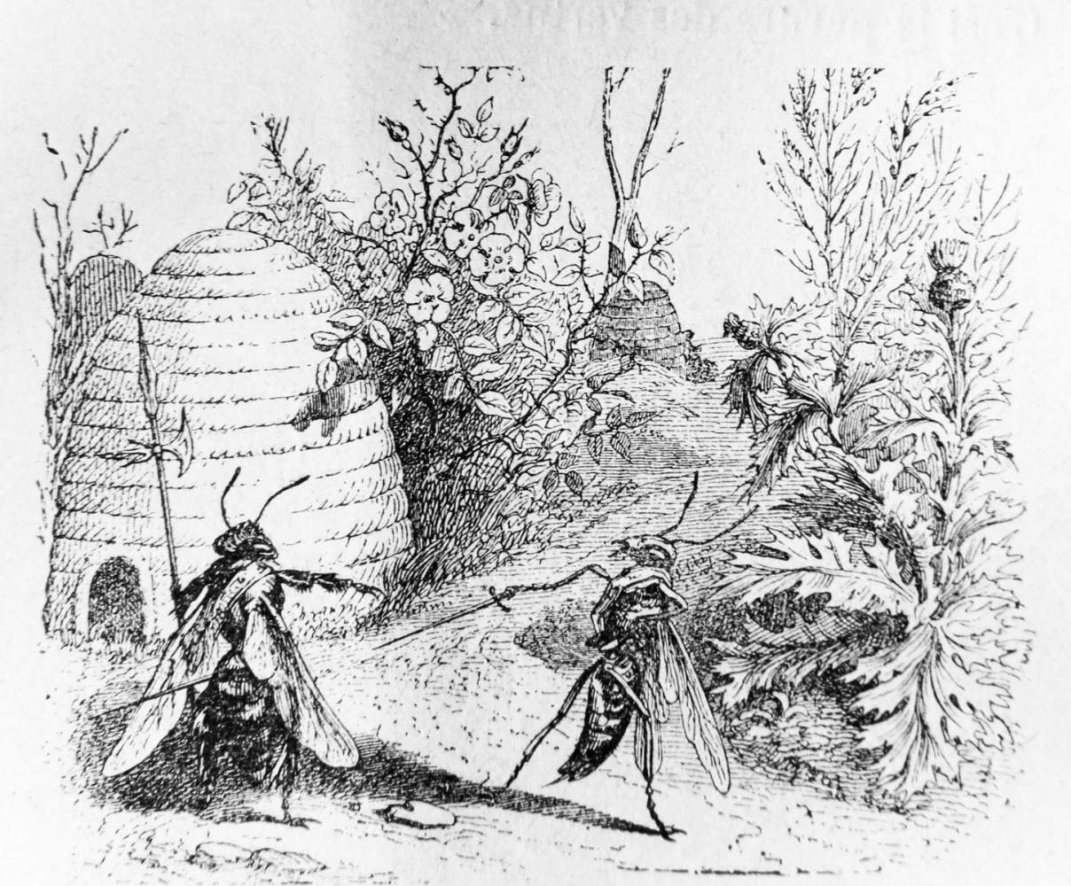 Жан Иньяс Изидор (Жерар) Гранвиль. Оса и Пчела. Иллюстрации к басням Флориана